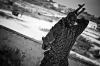 A TFG fighter cradles his machine gun in Xoosh.